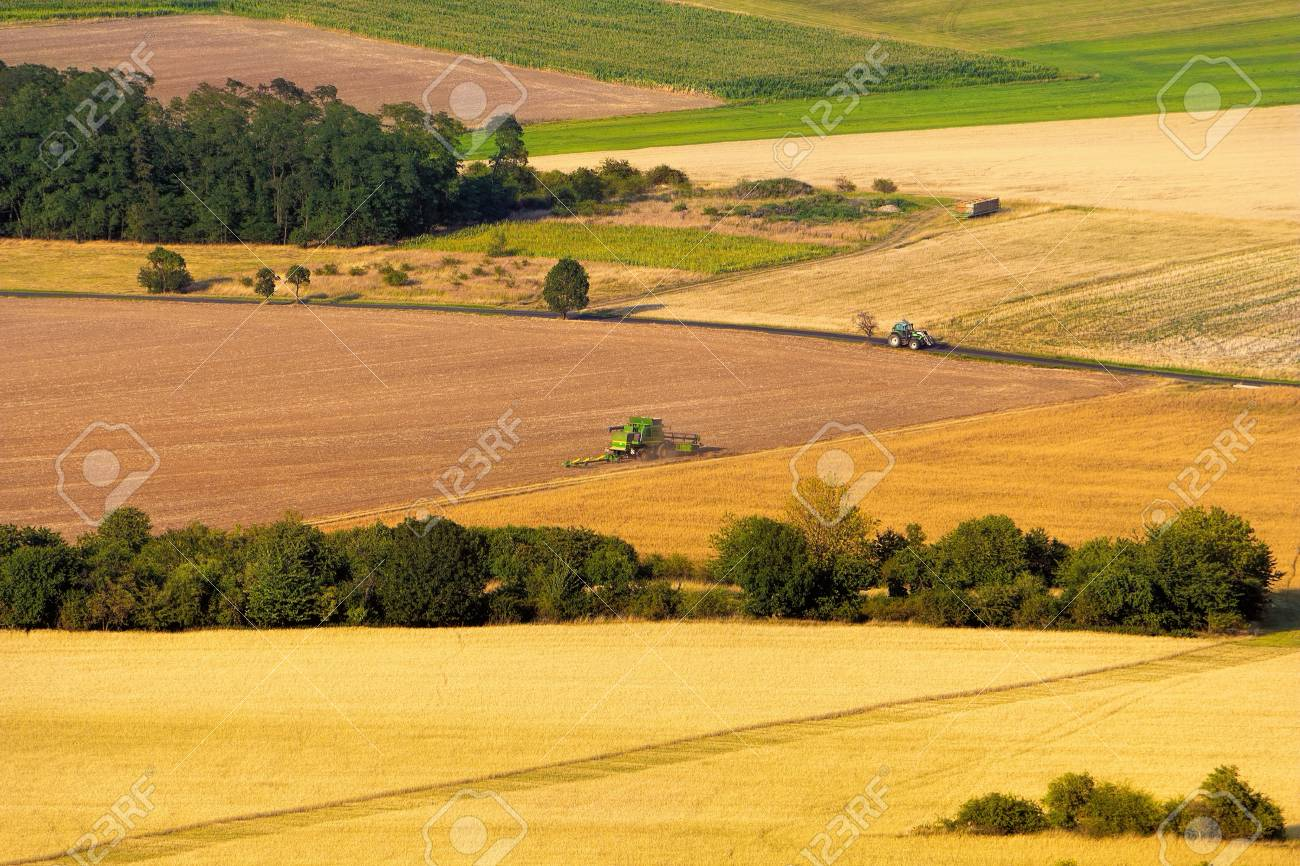 Modern harvest time, combine harvester working on colorful fields, beautiful lines, aerial view. - 105247912