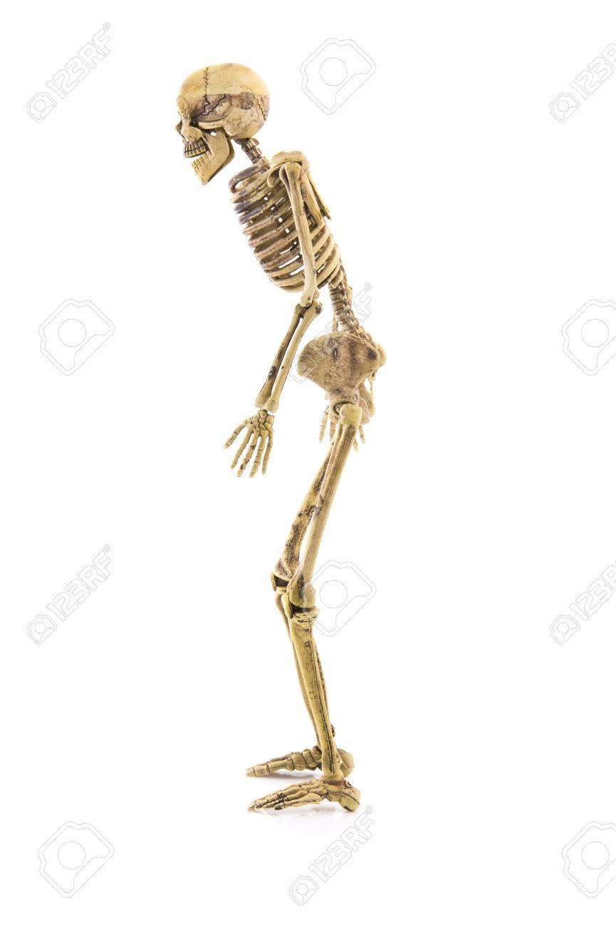 Anatomie Linke Seite Körper-Skelett Menschlichen Isoliert ...