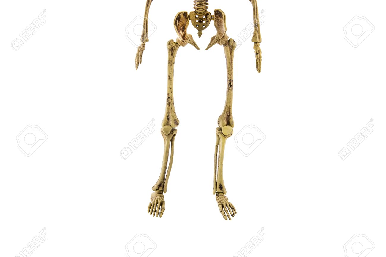 Anatomy Back Lower Body Human Skeleton Isolated Add Clipping.. Stock ...