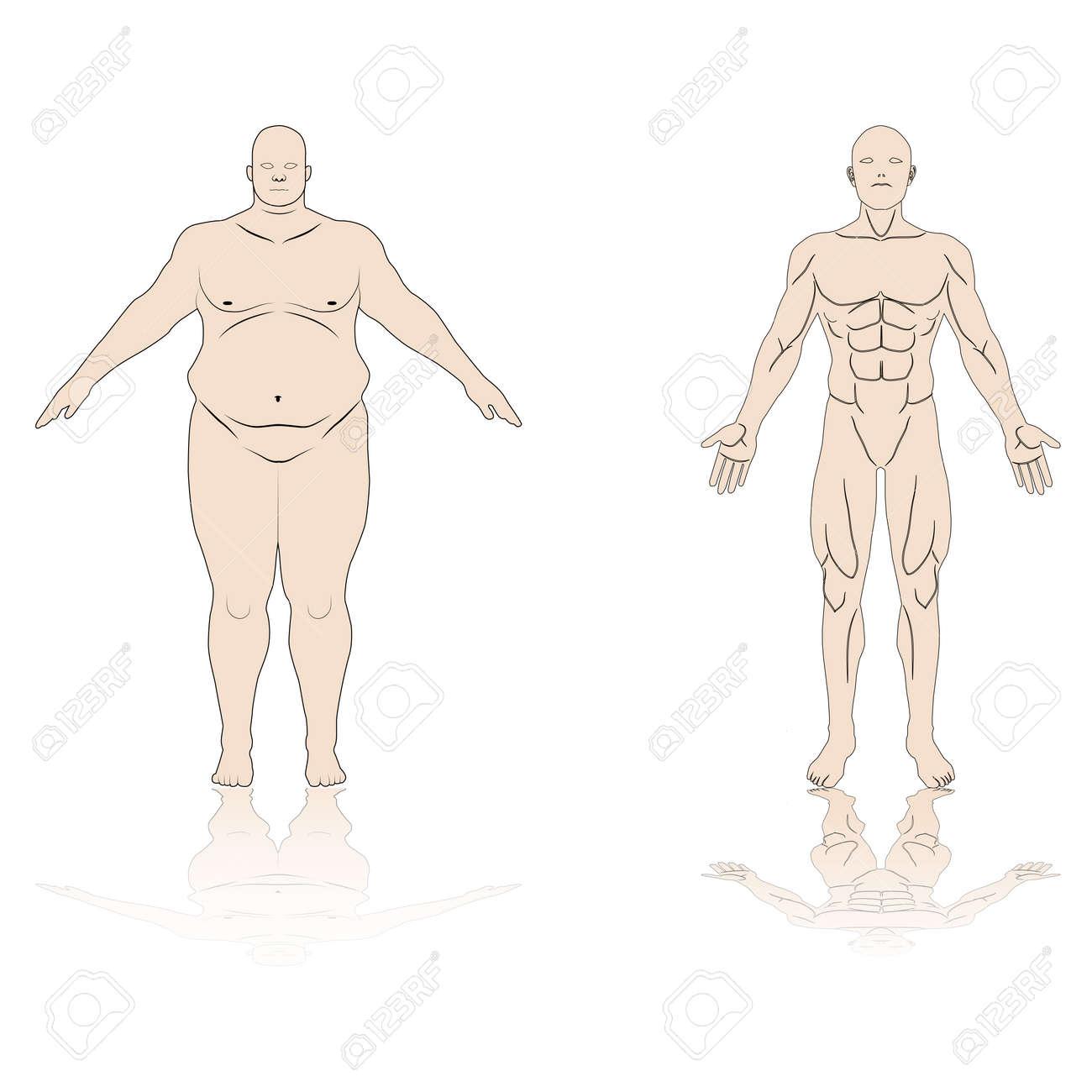 Anatomía, Macho, Grasa, Músculo, Sombra, Reflejo, Aislado, Plano De ...