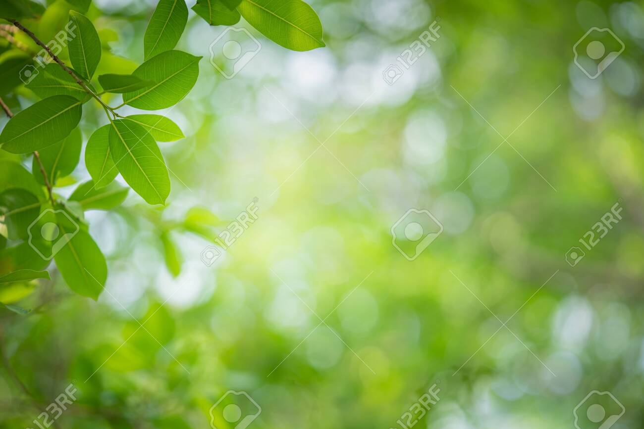 Close up nature view of green leaf on greenery blurred background under sunlight in garden with copy space for text. Natural green plant landscape for ecology and fresh wallpaper concept. - 143826833