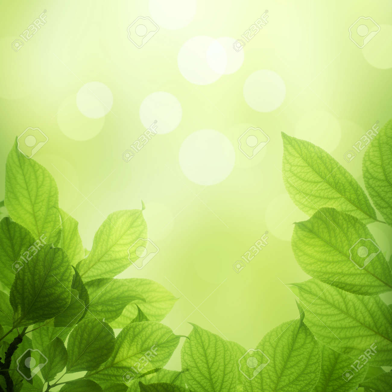 9317945-beautiful-soft-green-background-with-beech-leaves-stock, Powerpoint templates
