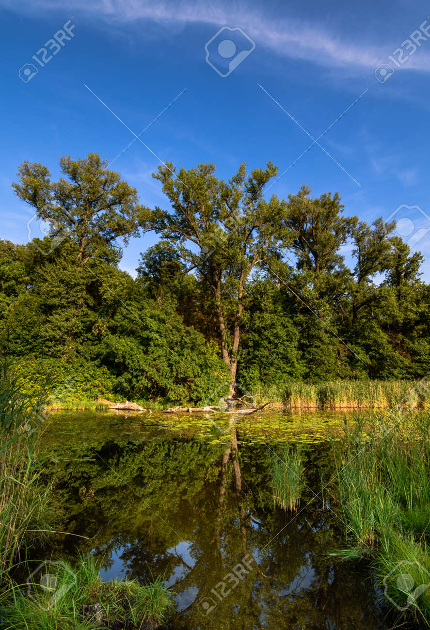 Large Pond In The Forest Of Lobau Stock Photo Picture And Royalty