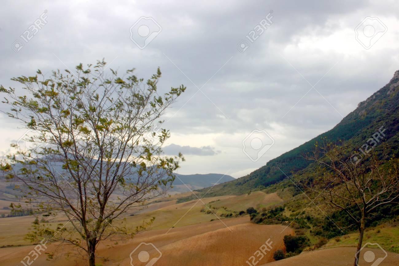 windshaken tree  in Navarra, Spain Stock Photo - 630911