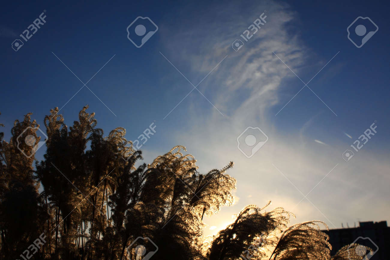 Grass and sky Stock Photo - 6097053