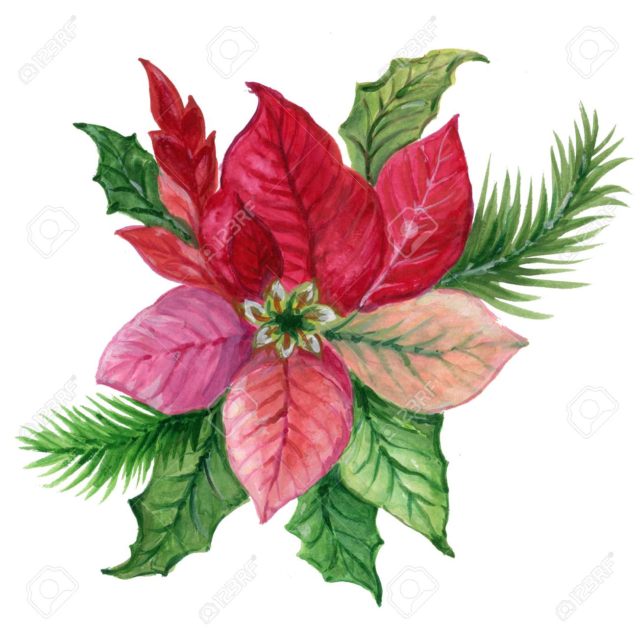 Christmas Plant Poinsettia Watercolor Gouache Colorful Pink Green