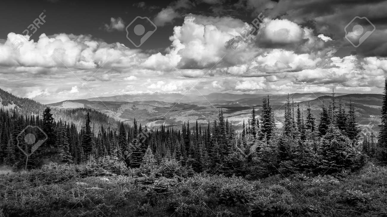 Black and White Photo of the Pine Forests in the Shuswap Highlands in British Columbia, Canada - 164114776