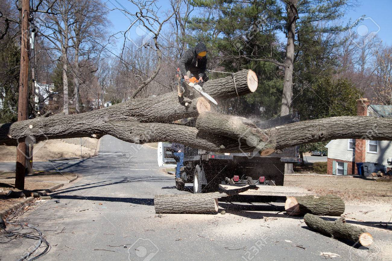 How can you find a local free tree cutting service?
