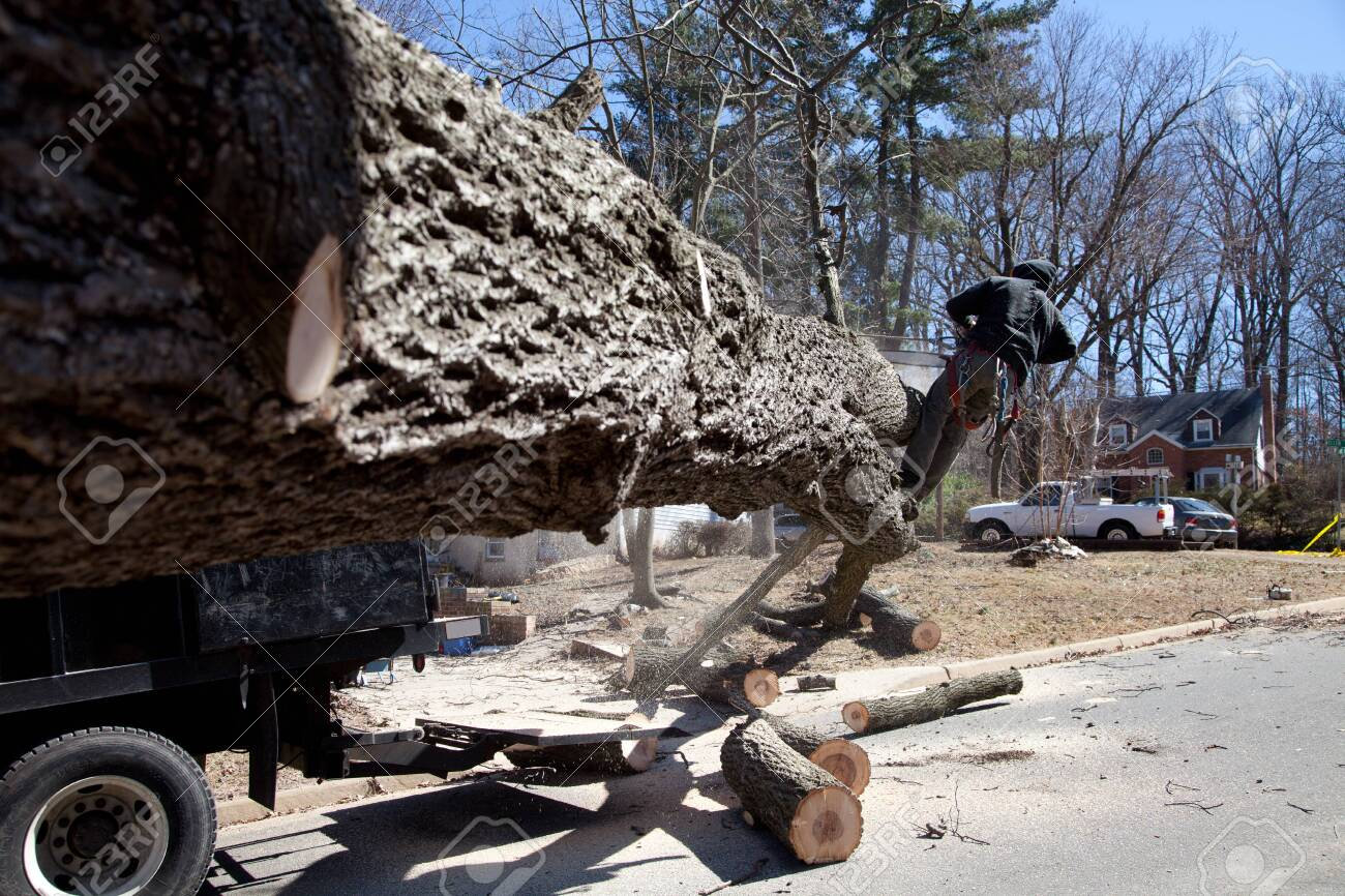 Man working on cutting uprooted tree blocking the road due to gusty wind - 26787987