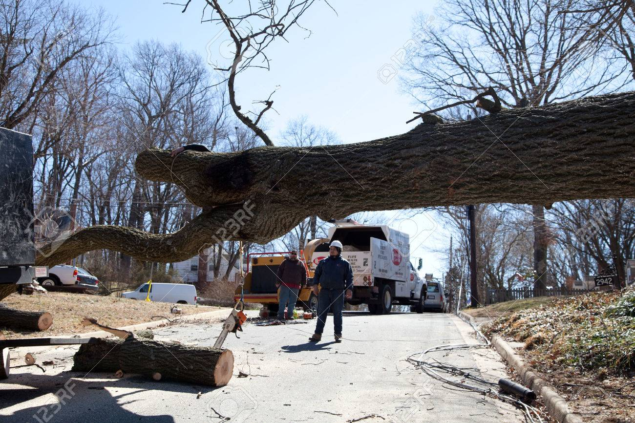 Uprooted tree removal operation after a gusty wind crossed Falls Church, VA - 26631910