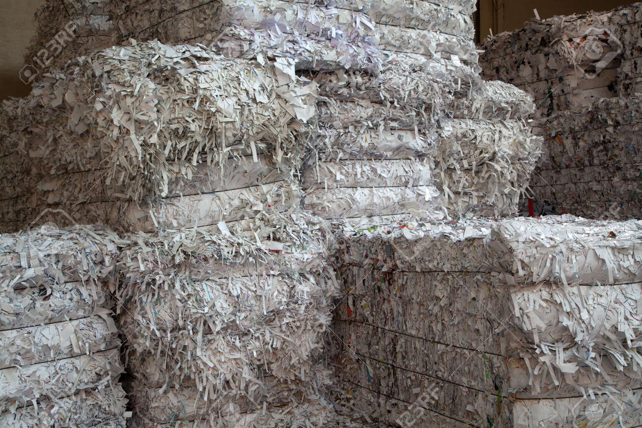 White paper packed in bales for recycling - 55932782
