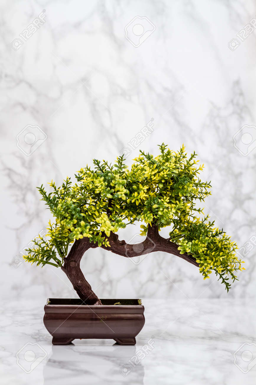 Small artificial bonsai tree on white marble background stock photo small artificial bonsai tree on white marble background stock photo 58155975 mightylinksfo