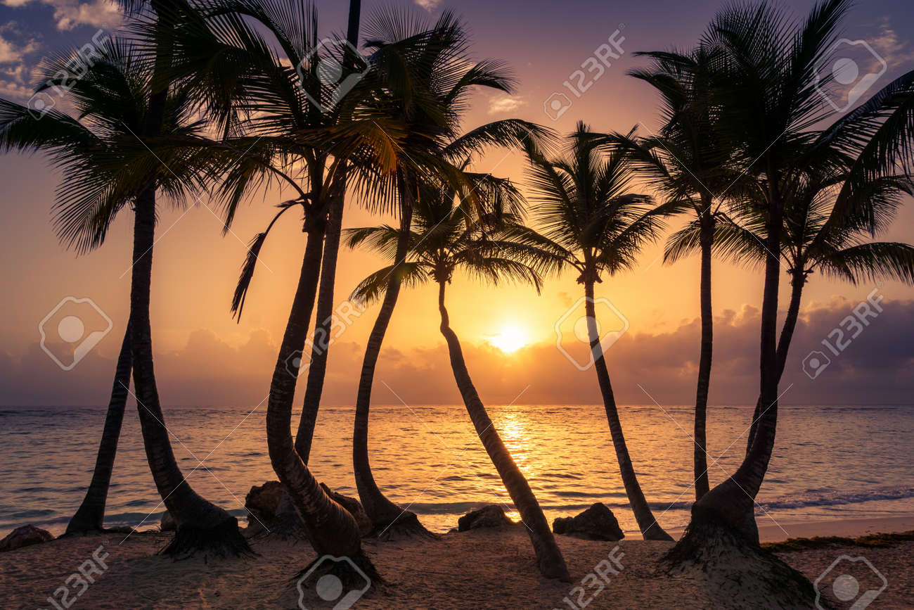 Palms Silhouettes On A Tropical Beach At Sunset Dominican Republic Bahamas Cuba