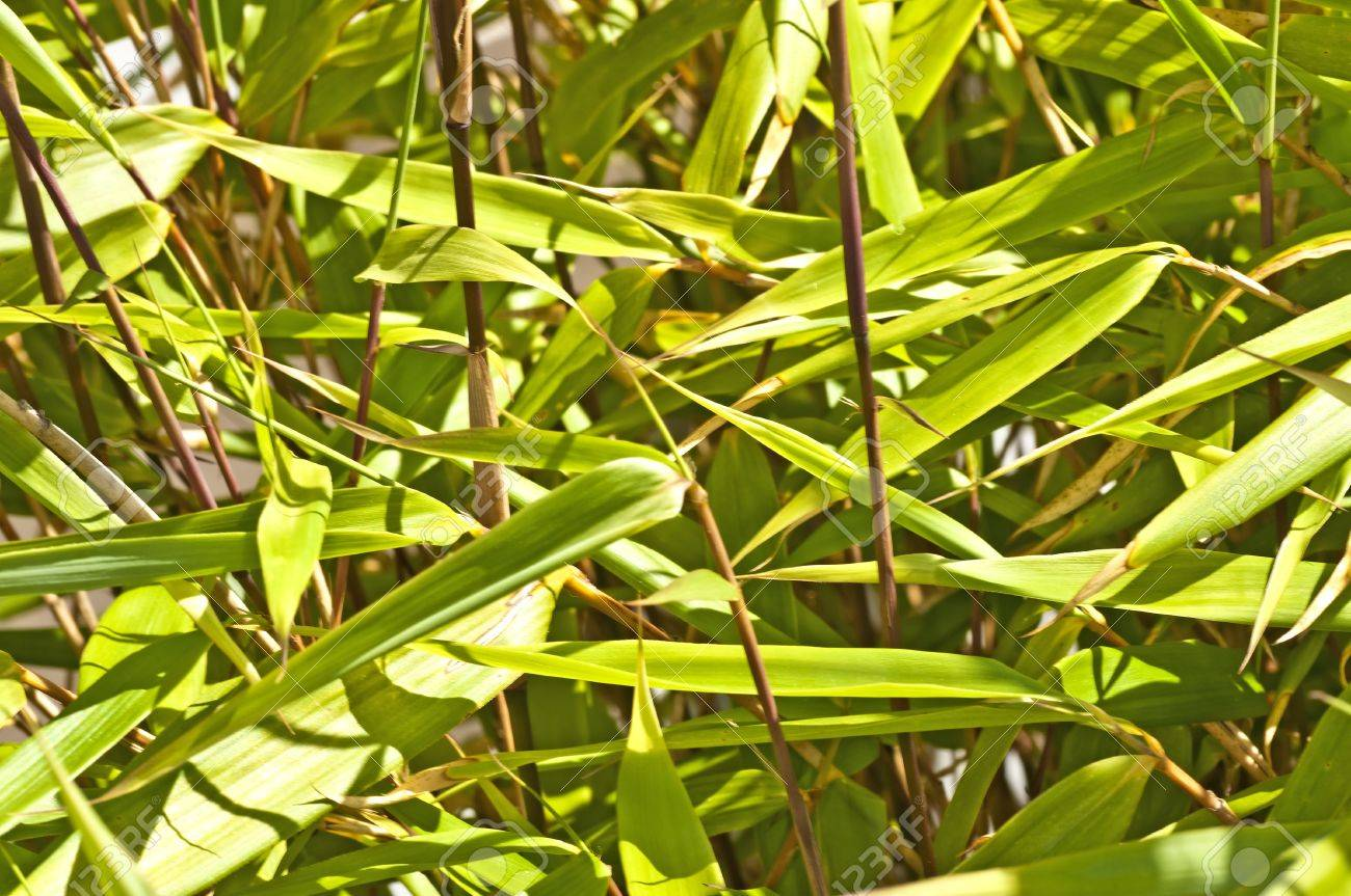 bamboo Stock Photo - 13854099