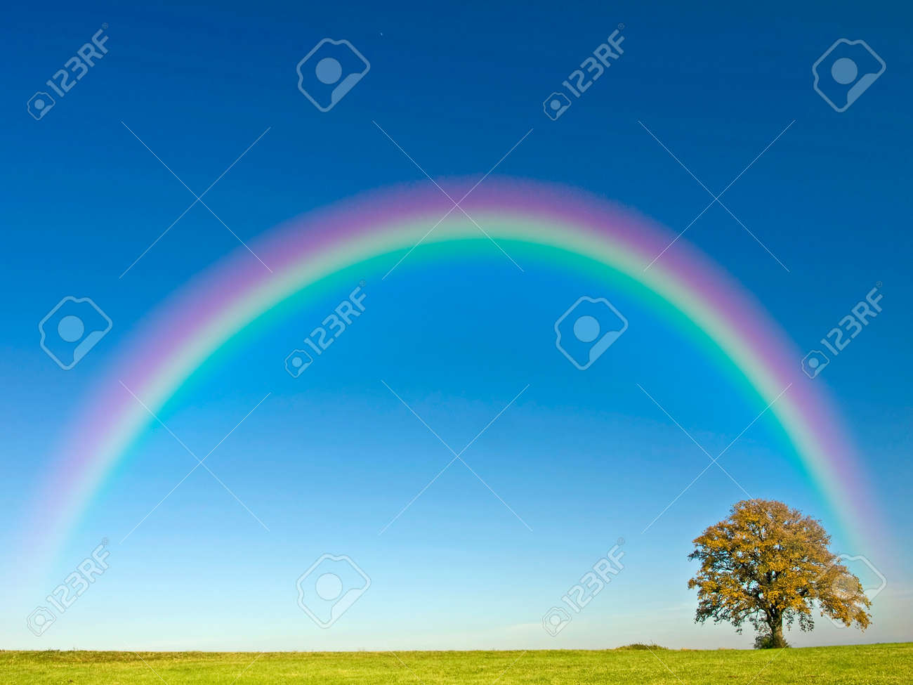 Tree with rainbow - 24719858