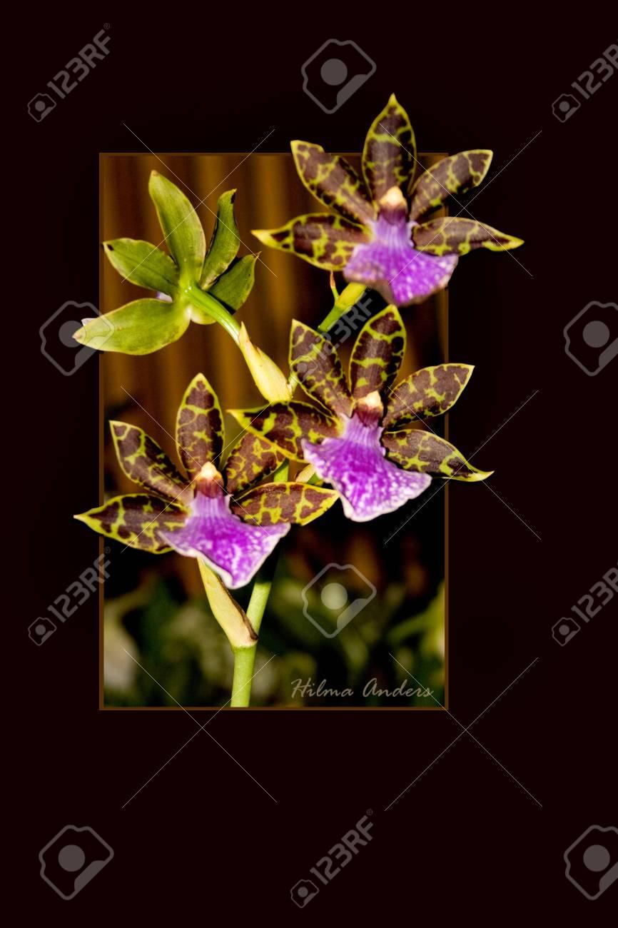Schönen Orchideen Auf Matte Und Rahmen Isoliert Lizenzfreie Fotos ...