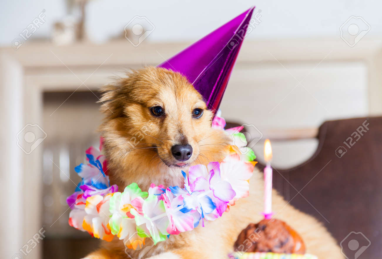 Happy Birthday Dog Looks To Candle Stock Photo