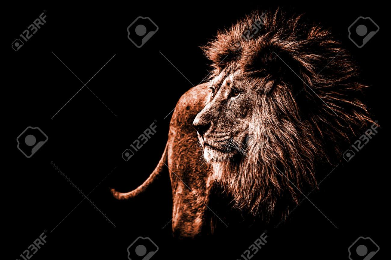 a lion portrait in dark orange colours - 89752944