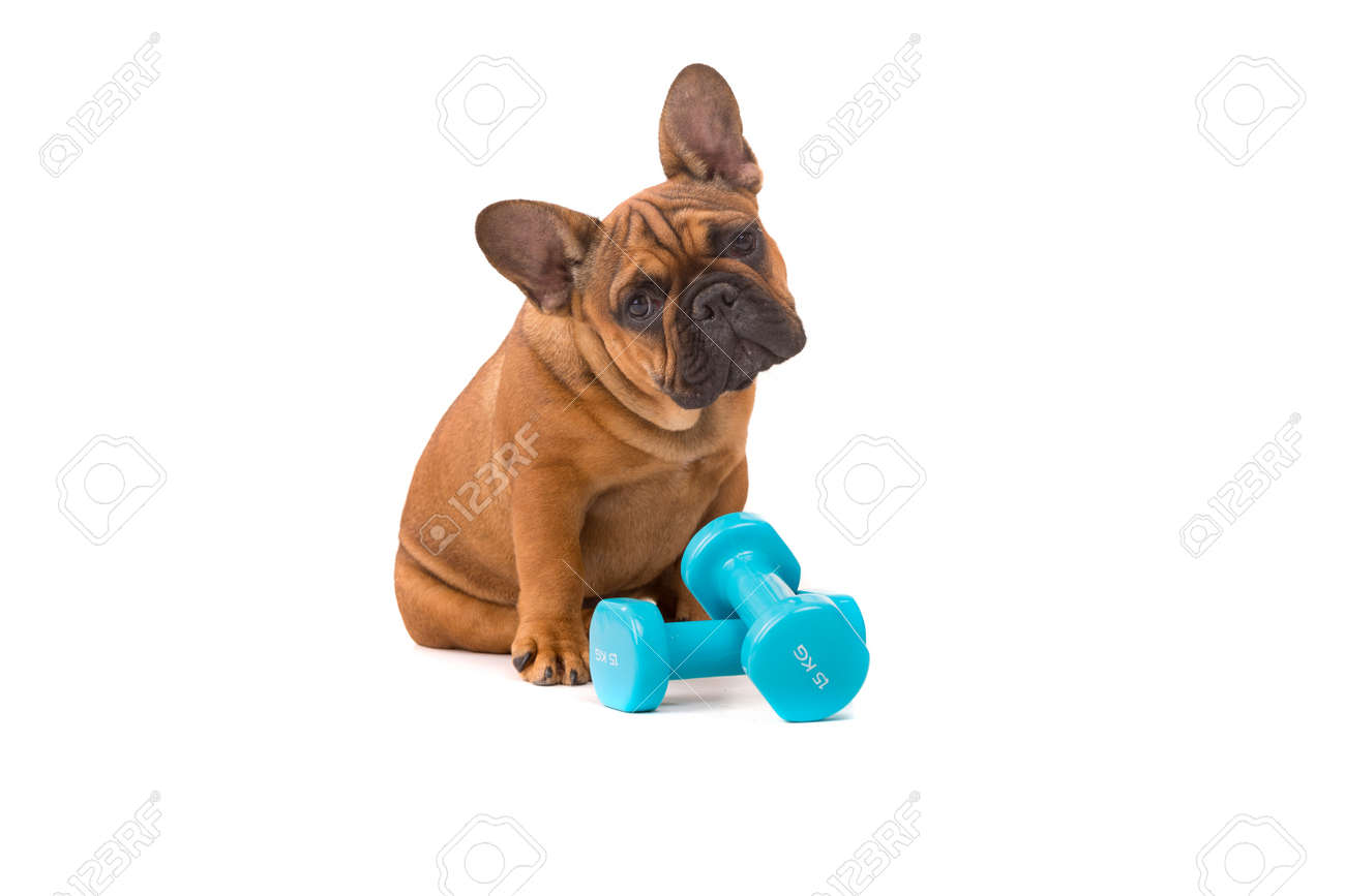 Funny french bulldog puppy going on a diet isolated over white funny french bulldog puppy going on a diet isolated over white stock photo 47662842 nvjuhfo Choice Image