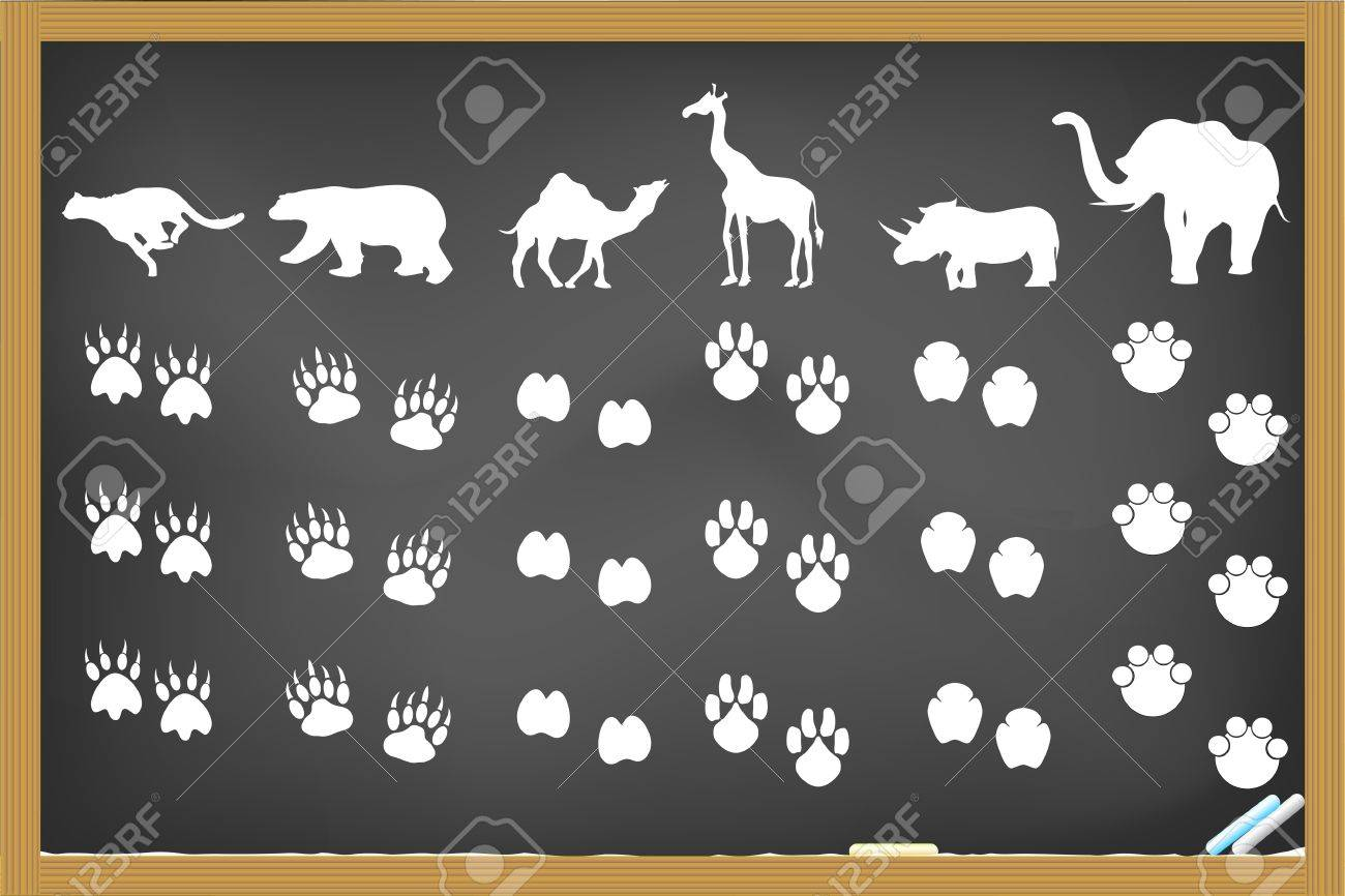 9 973 animal tracks stock illustrations cliparts and royalty free