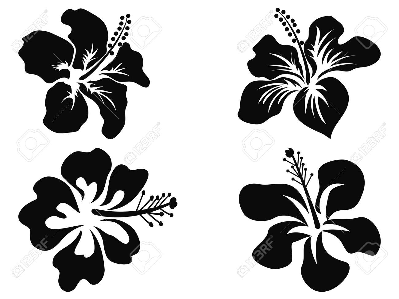 Isolated Black Hibiscus Vector Silhouettes On White Background Stock