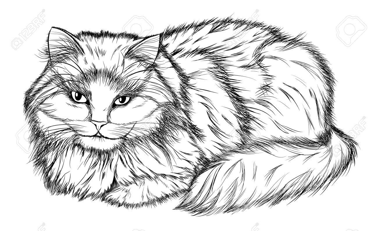 Mentir Gato Dibujo A Lápiz En Blanco Y Negro Ilustraciones