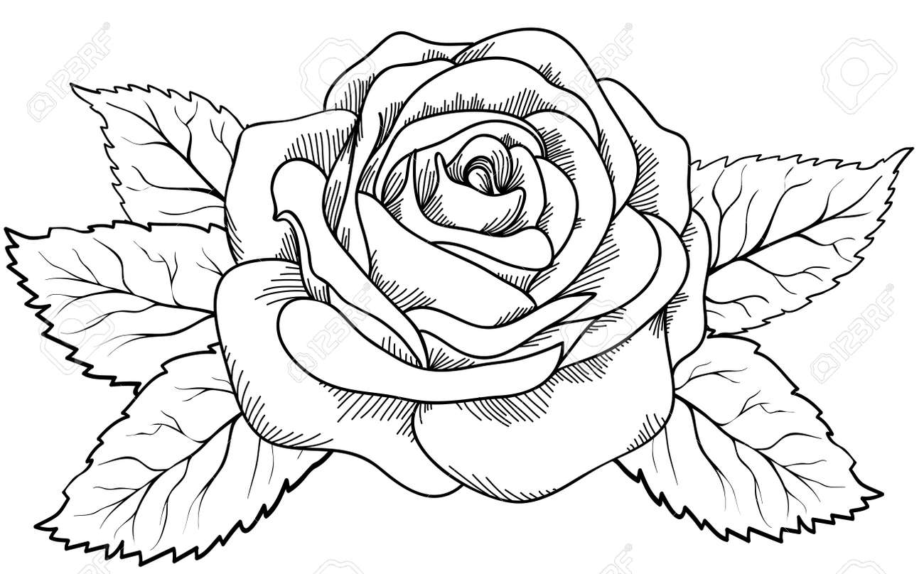 Beautiful Rose In The Style Of Black And White Engraving Many
