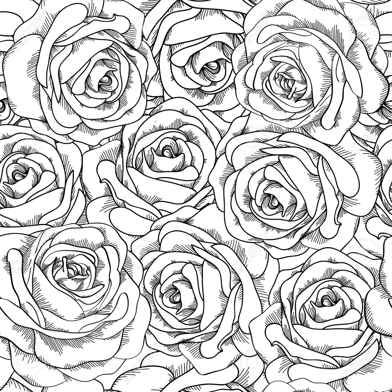 Black and white seamless background. Roses hand-drawn. - 24167875