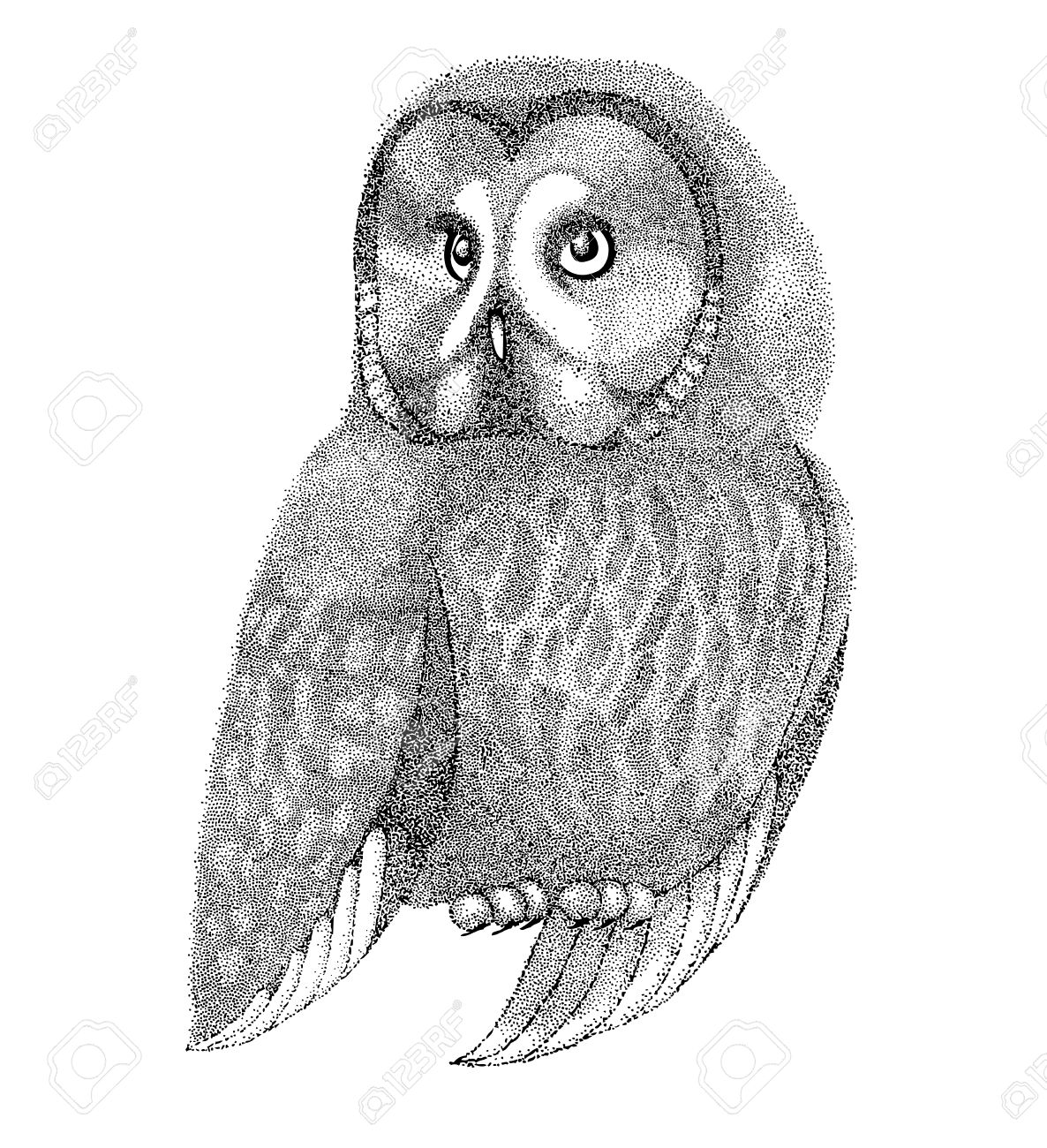 Graphic Pen Drawings 24167876-sketch-owls-drawn