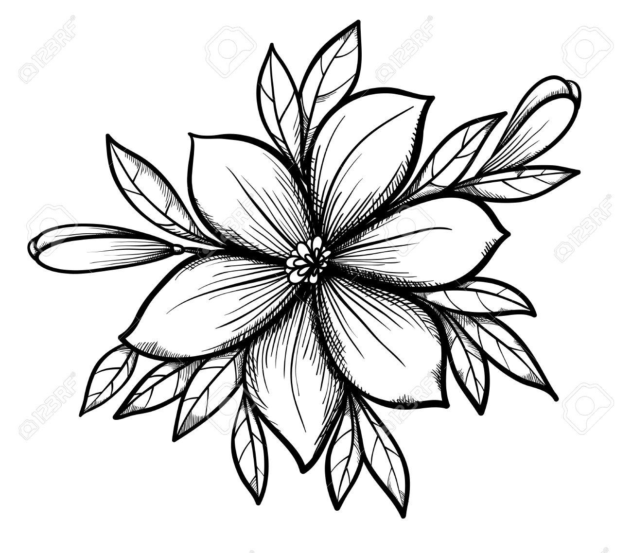 Hermoso Dibujo Gráfico Lily Rama Con Hojas Y Brotes De Las Flores De