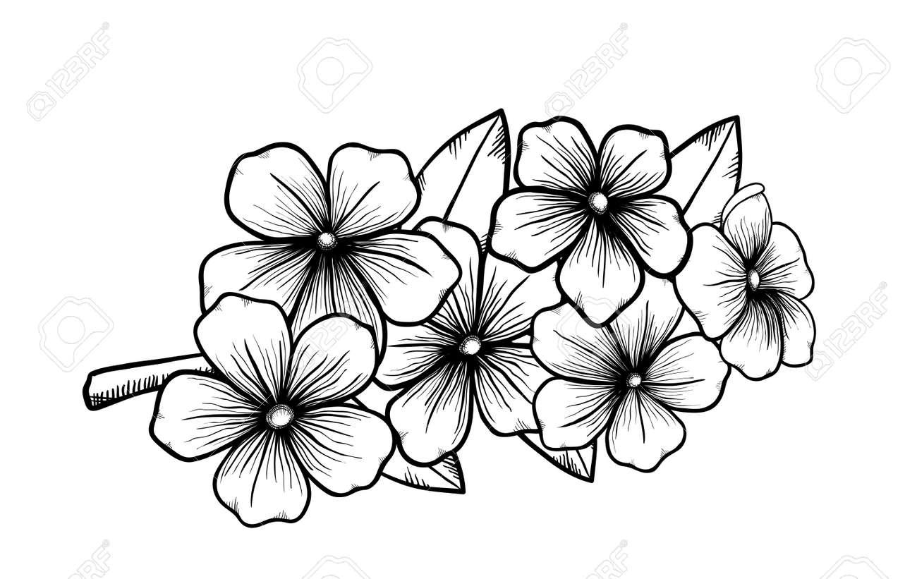 Banque dimages , branche dun arbre en fleurs dans le style graphique blanc noir, dessin à la main Symbole du printemps