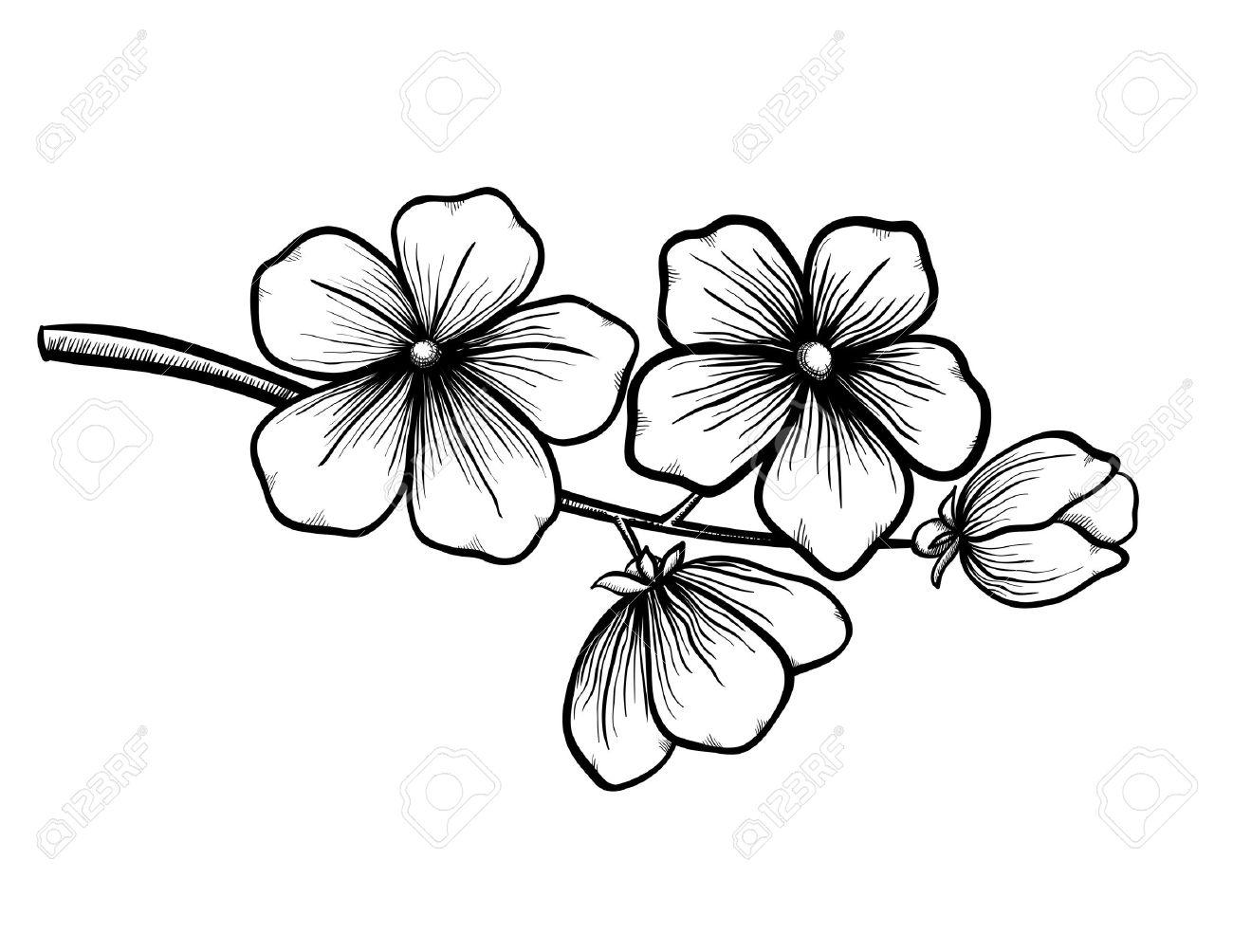 Rama De Un árbol En Flor En El Gráfico Del Estilo Blanco Y Negro