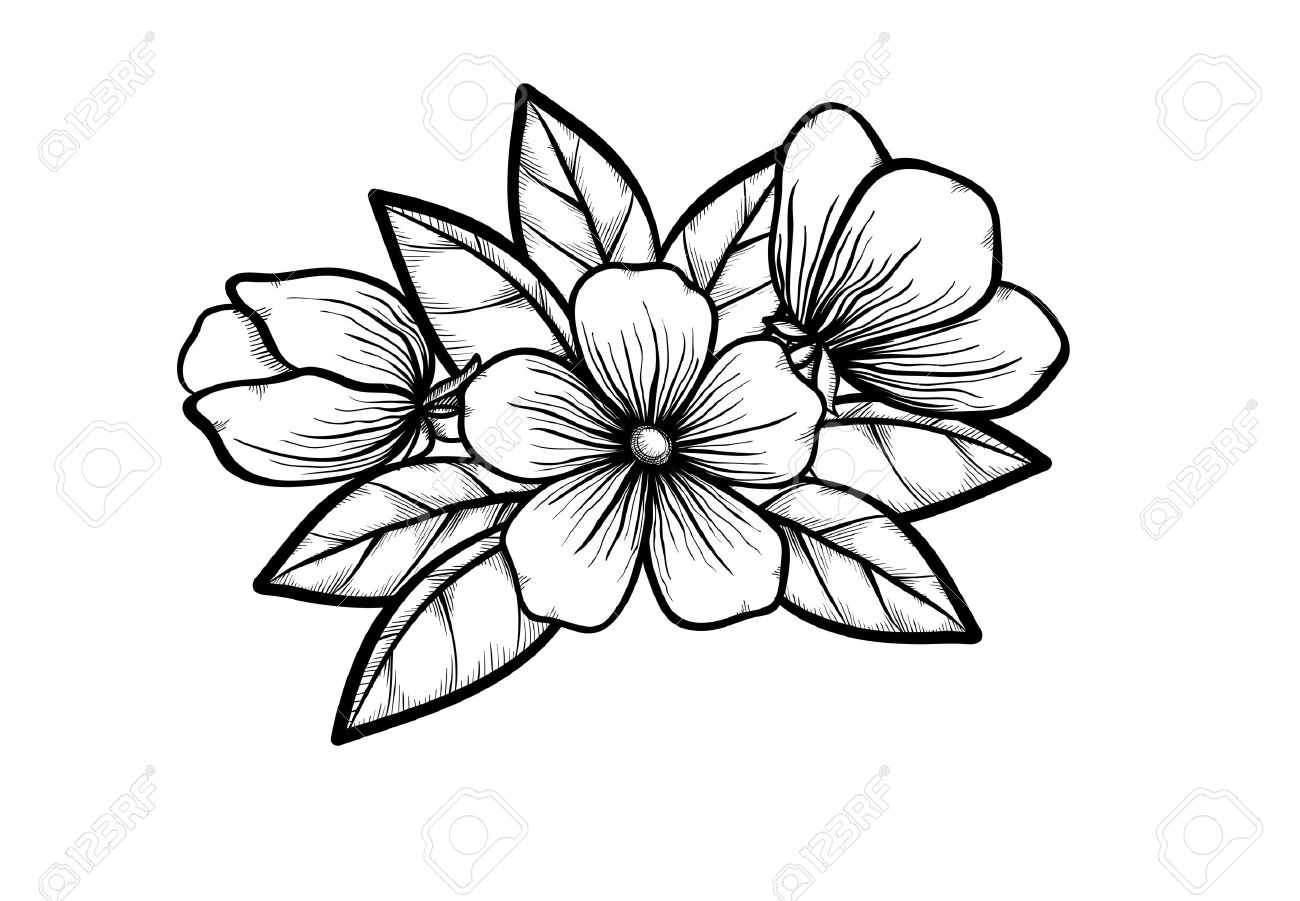 Branch Of A Blossoming Tree In Graphic Black White Style Drawing