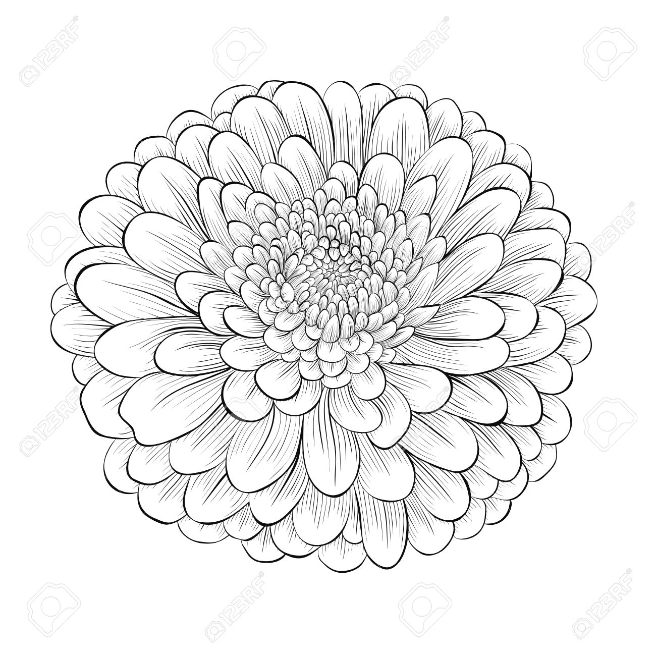 beautiful monochrome black and white flower isolated on white