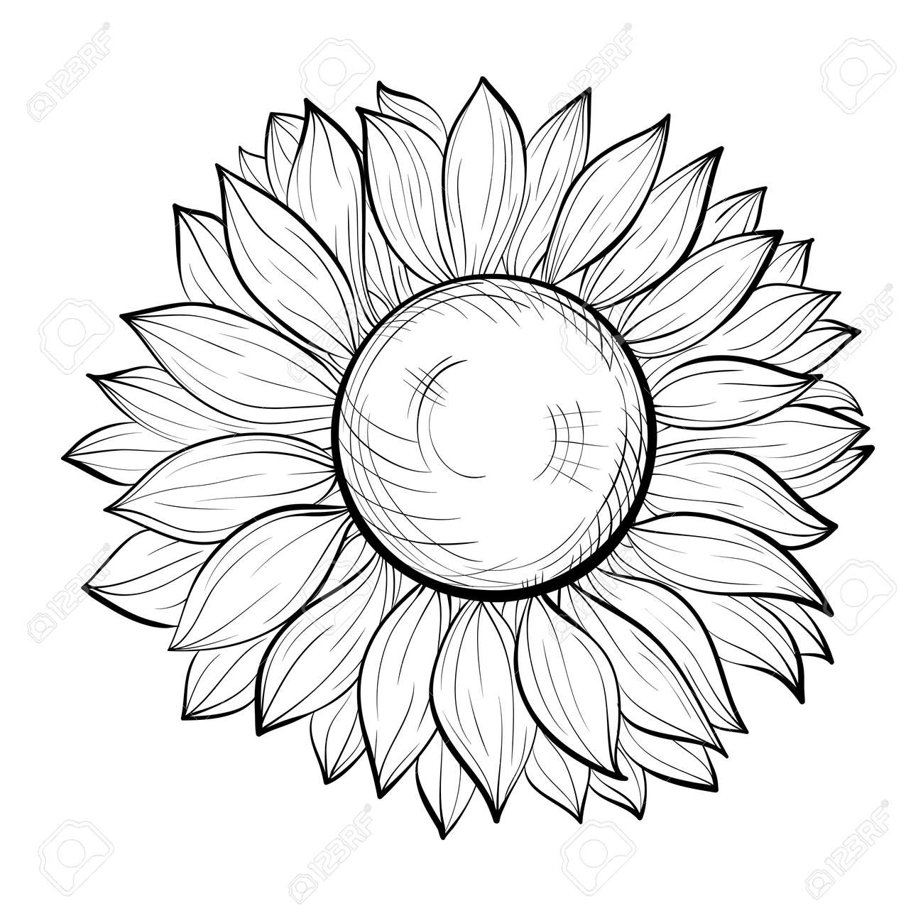 Beautiful Black And White Sunflower Isolated On Background Hand Drawn Contour Lines