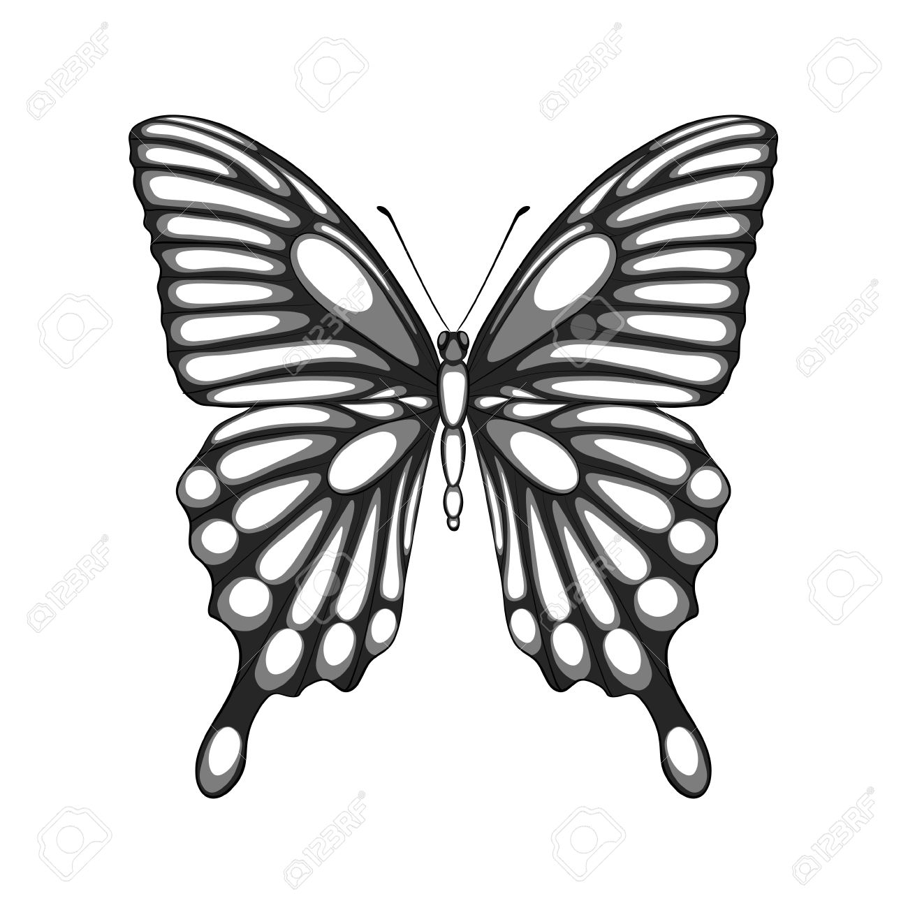 Beautiful Black And White Butterfly With Watercolor Effect ...
