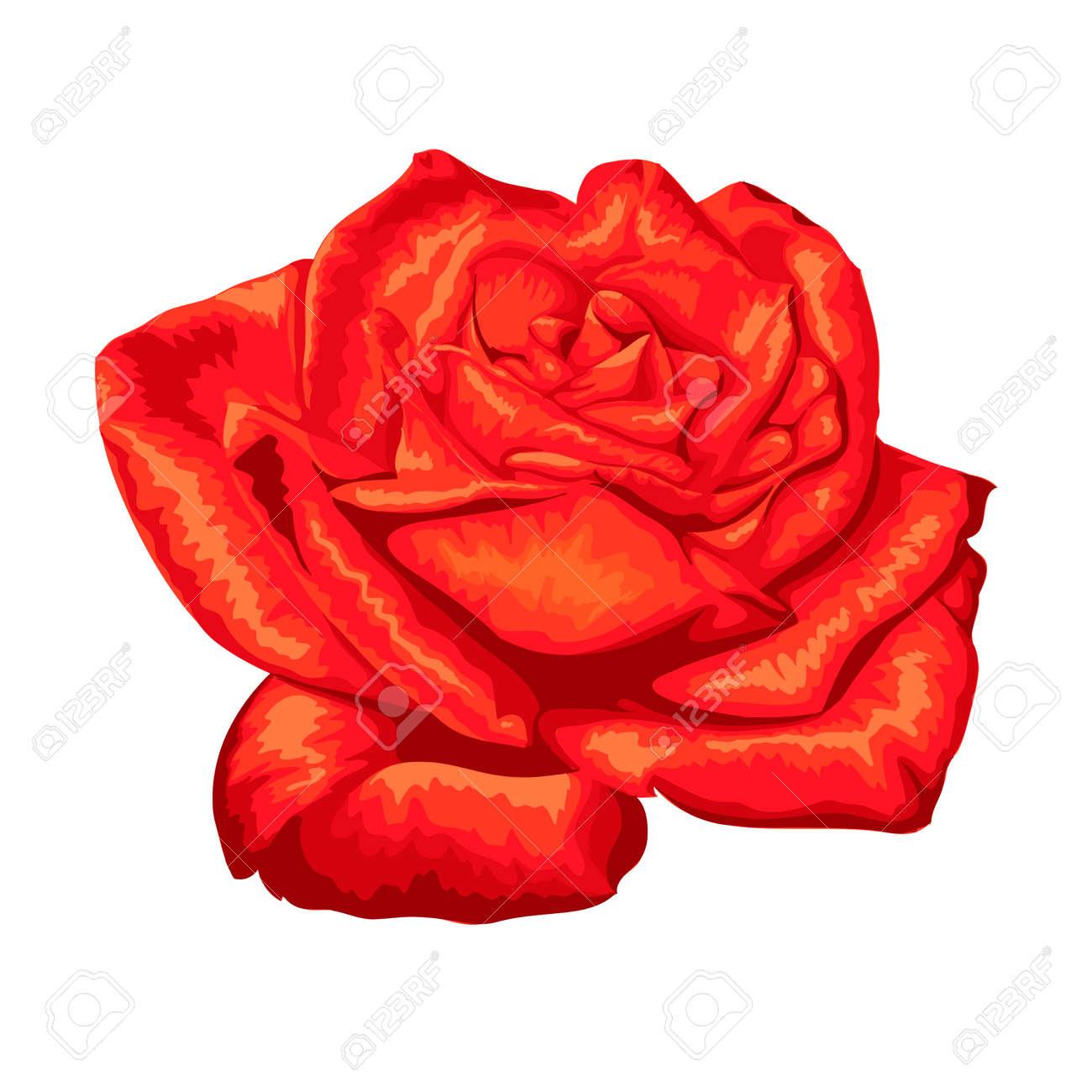 Belle Rose Rouge Avec L Effet D Un Dessin A L Aquarelle Isole Sur