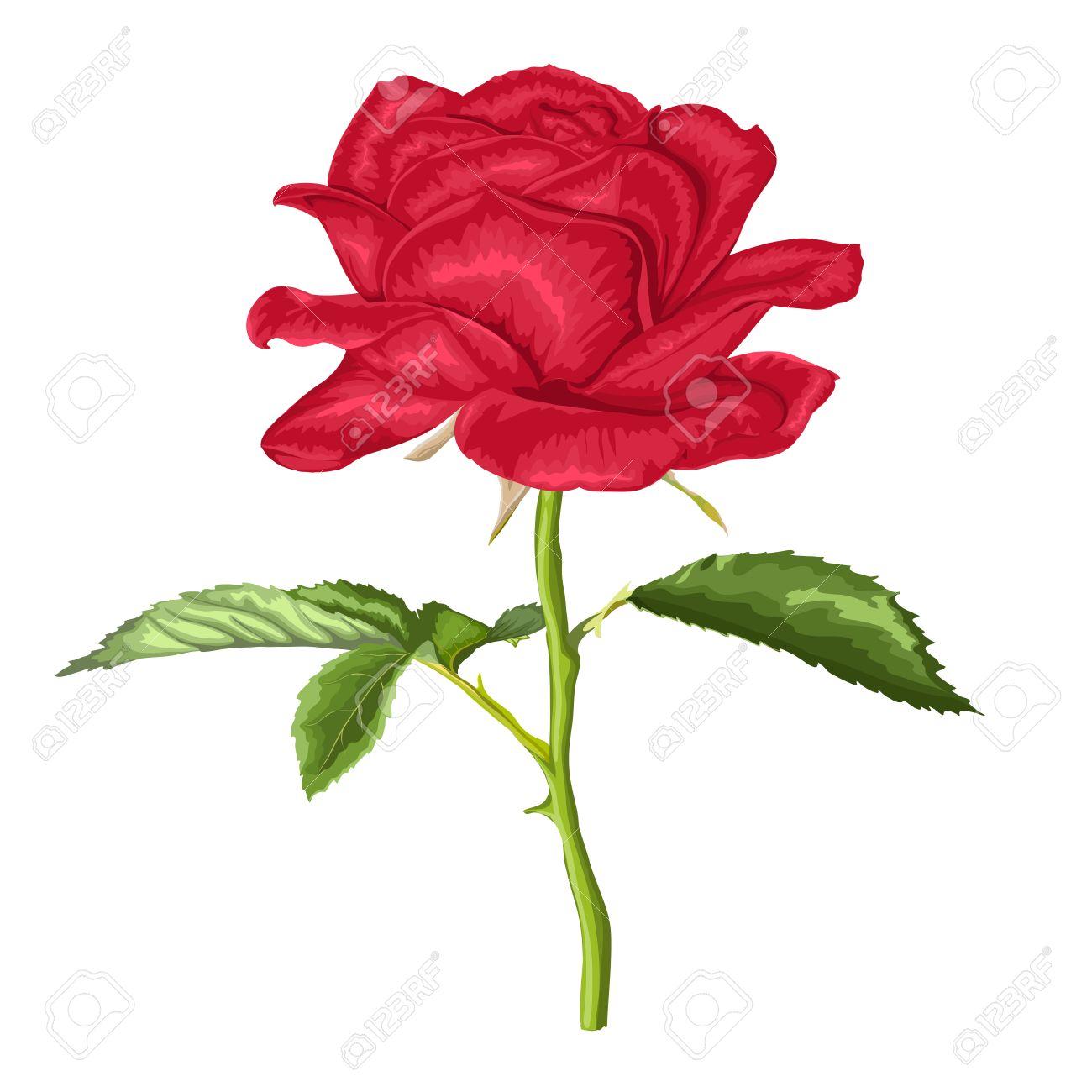 Belle Rose Rouge Avec Une Longue Tige Et Les Feuilles Avec L Effet D