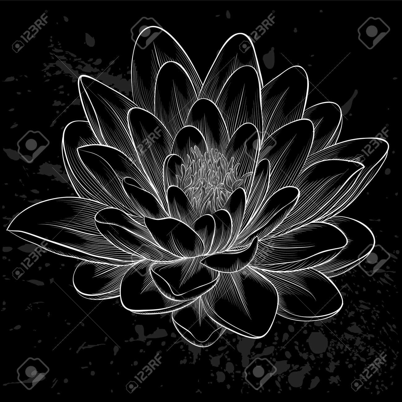 Beautiful Monochrome Black And White Lotus Flower Royalty Free