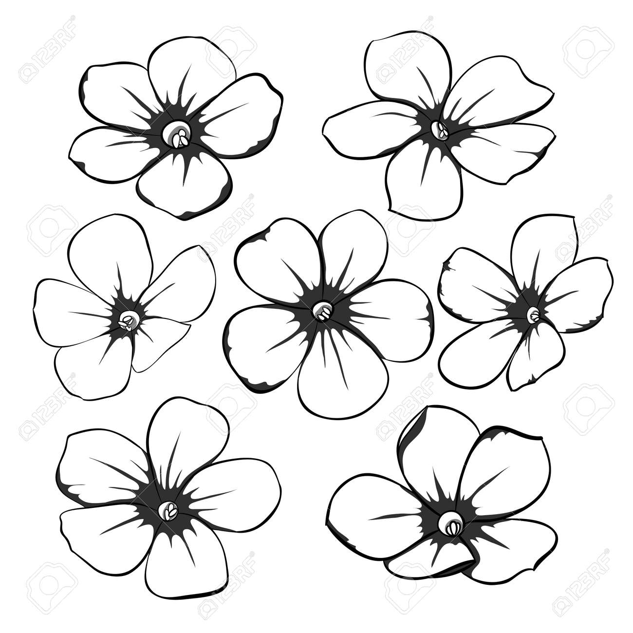 Beautiful Monochrome Black And White Floral Collection With Leaves
