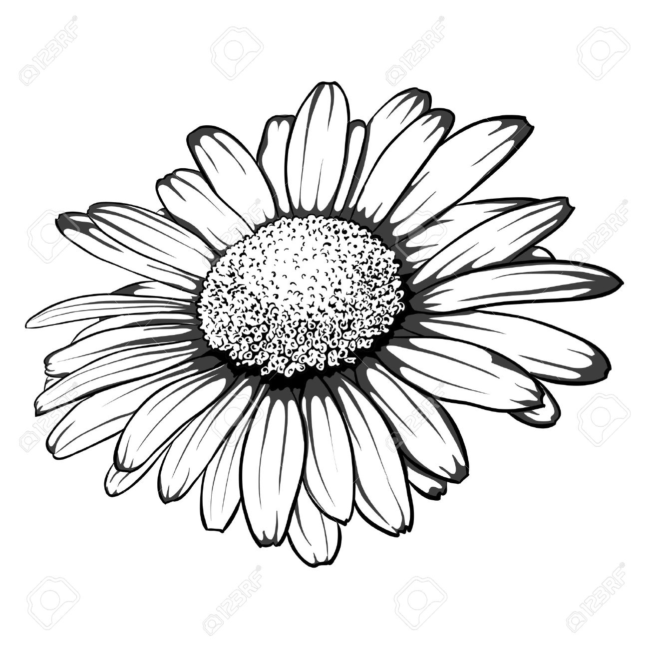 Beautiful monochrome black and white daisy flower isolated beautiful monochrome black and white daisy flower isolated for greeting cards and invitations of m4hsunfo