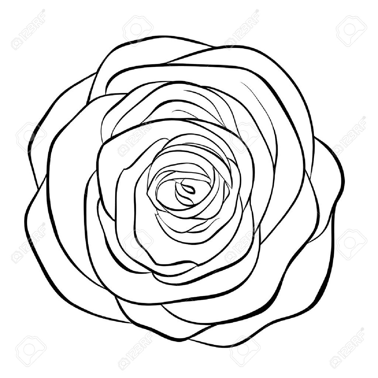 Beautiful Monochrome Black And White Rose Isolated On White ...