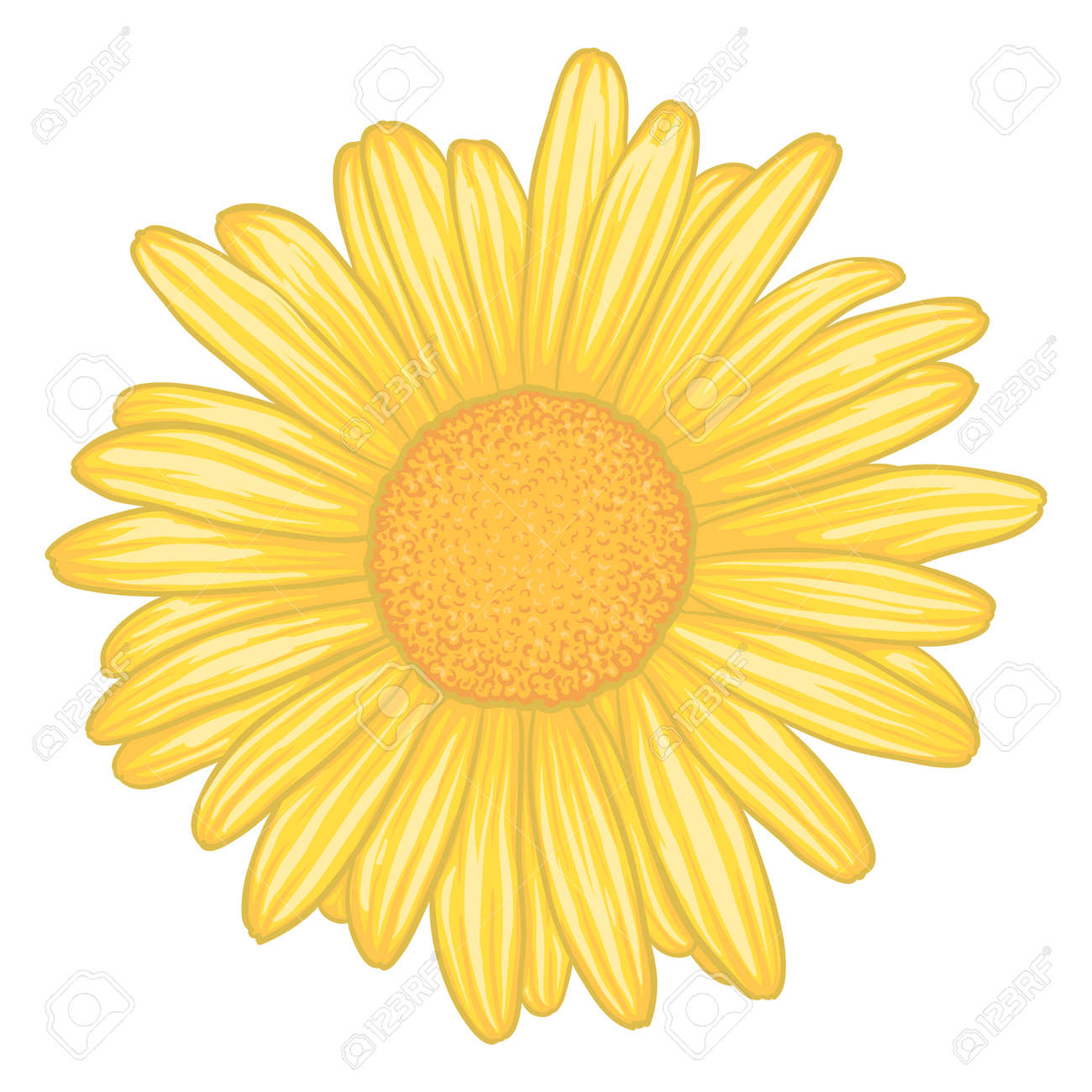 Beautiful Yellow Daisy Flower With Effect Watercolor Isolated Royalty Free Cliparts Vectors And Stock Illustration Image 47261098