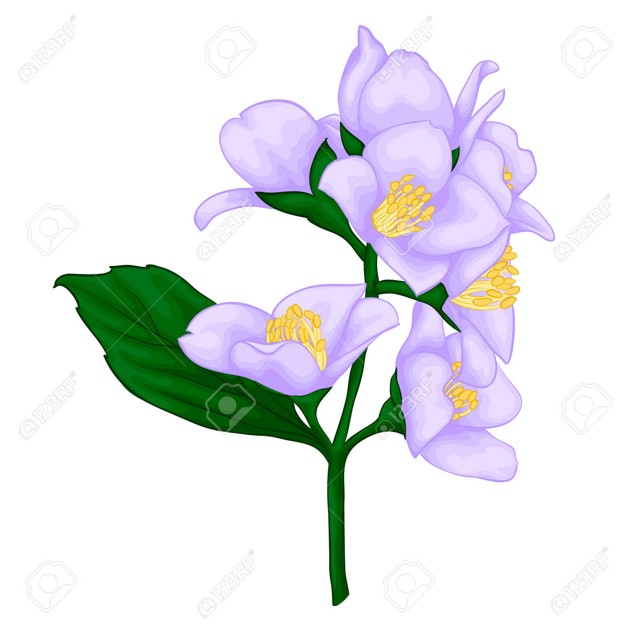 beautiful jasmine branch isolated on white background. for greeting cards and invitations of the wedding, birthday, Valentine's Day, mother's day and other seasonal holidays - 48051811