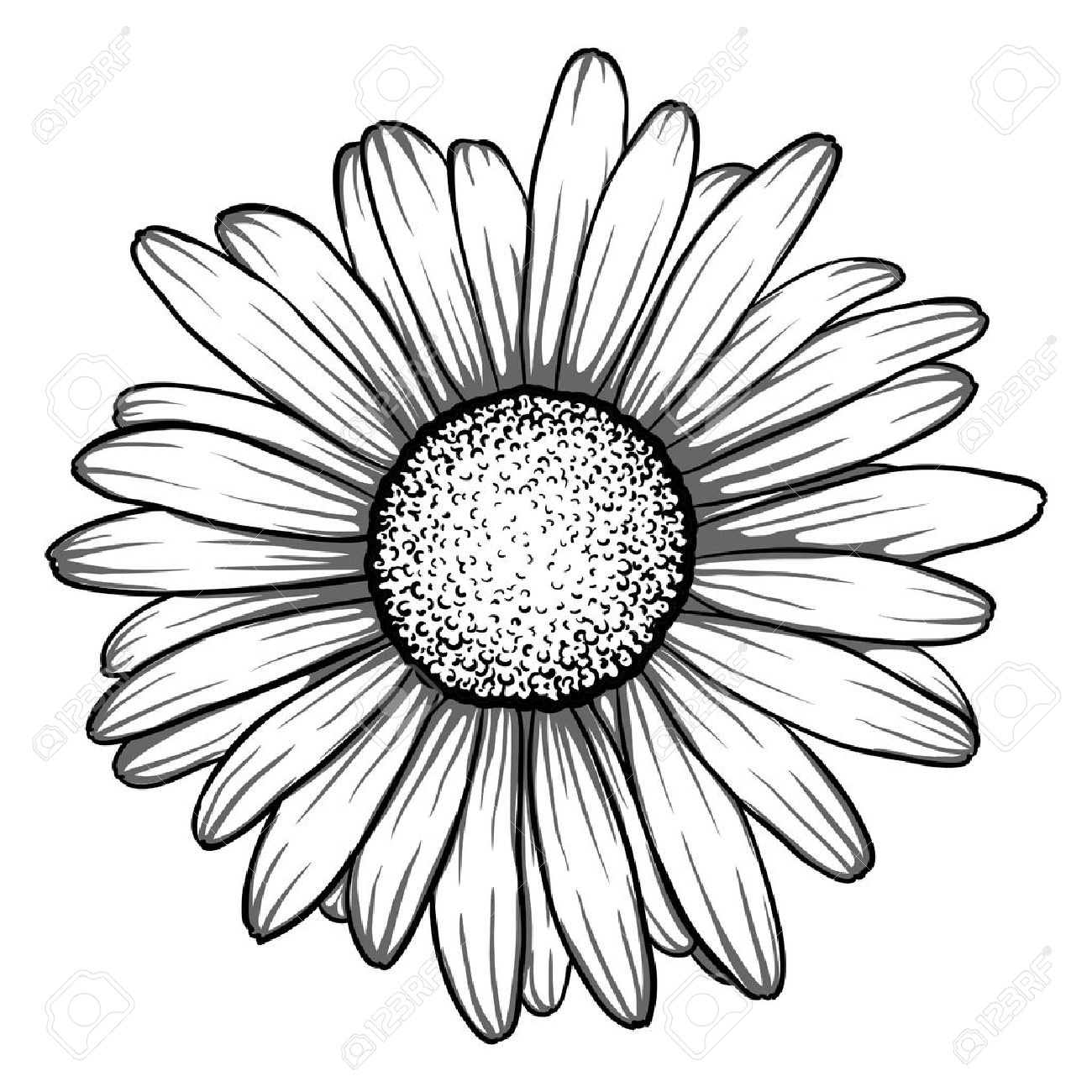 Beautiful monochrome black and white daisy flower isolated for greeting cards and invitations of
