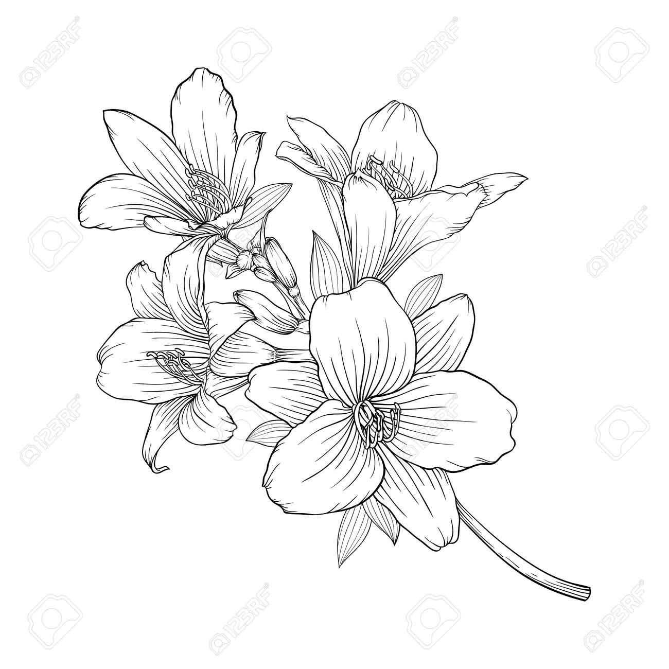 Dessin Fleur Simple Noir Et Blanc