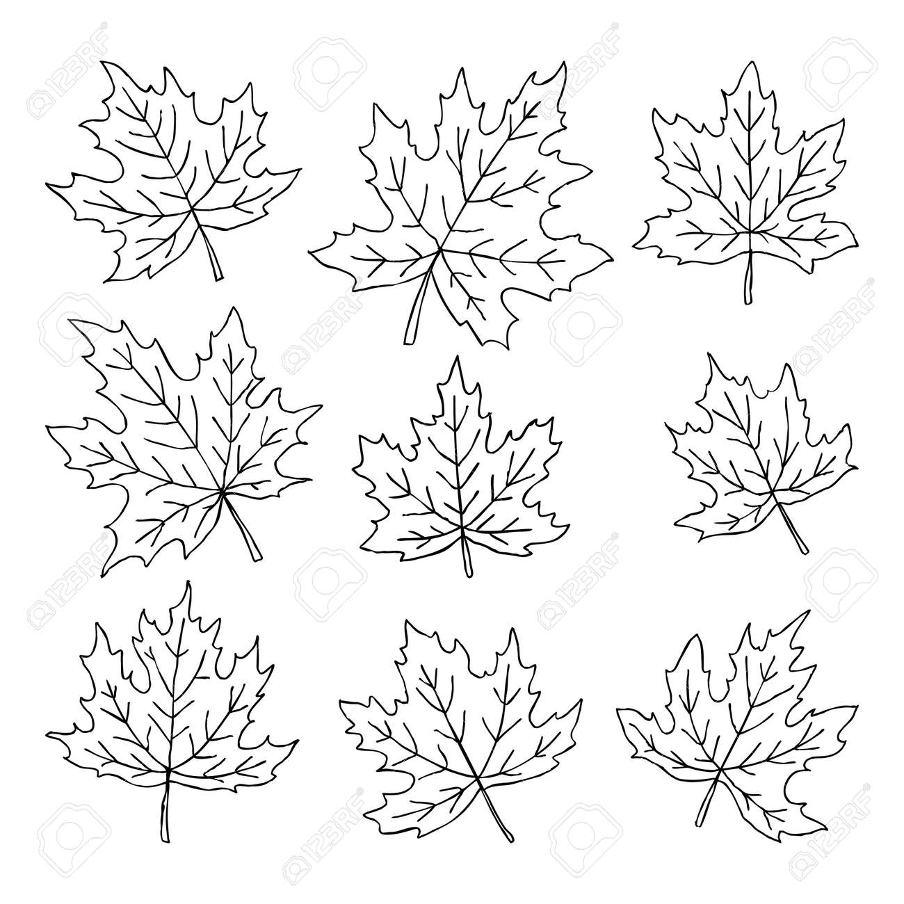 Beautiful Set Of Doodle Maple Leaves Isolated Sketch Design