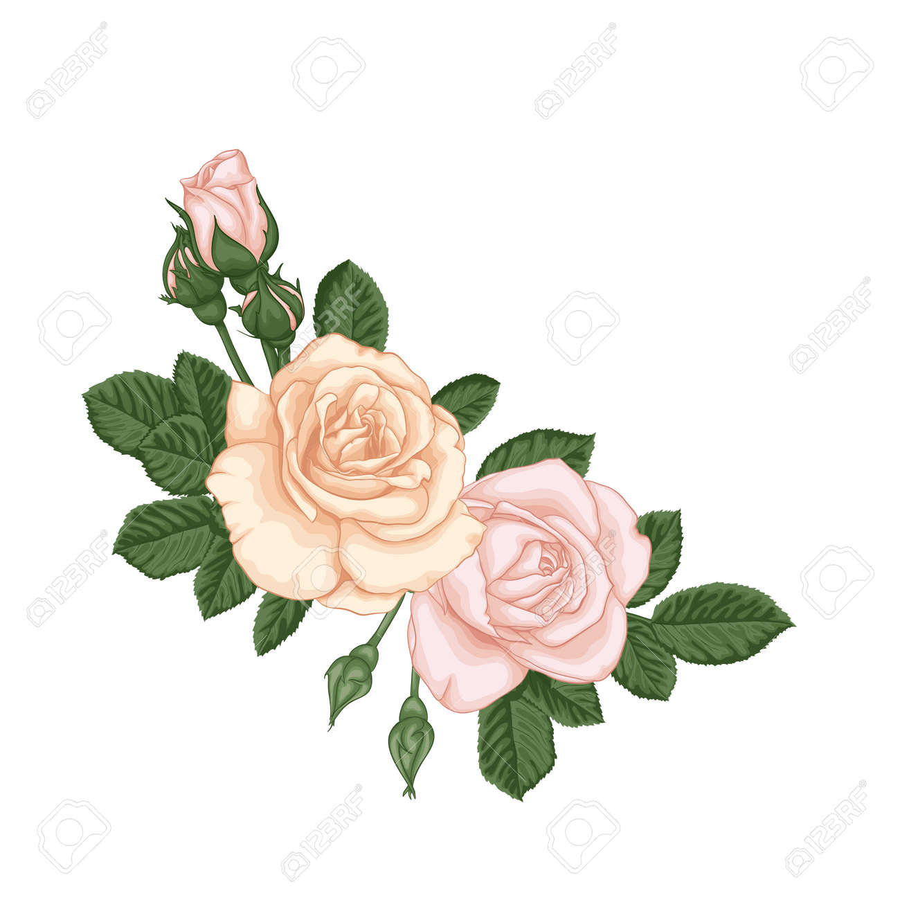 beautiful bouquet with pastel pink roses buds and leaves. Floral arrangement. design greeting card and invitation of the wedding, birthday, Valentine's Day, mother's day and other holiday. - 149843595