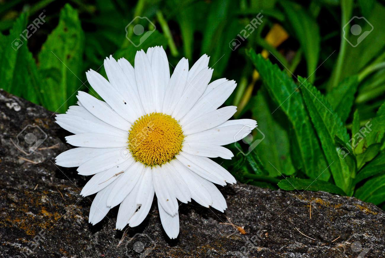 Фото цветы для маргариты