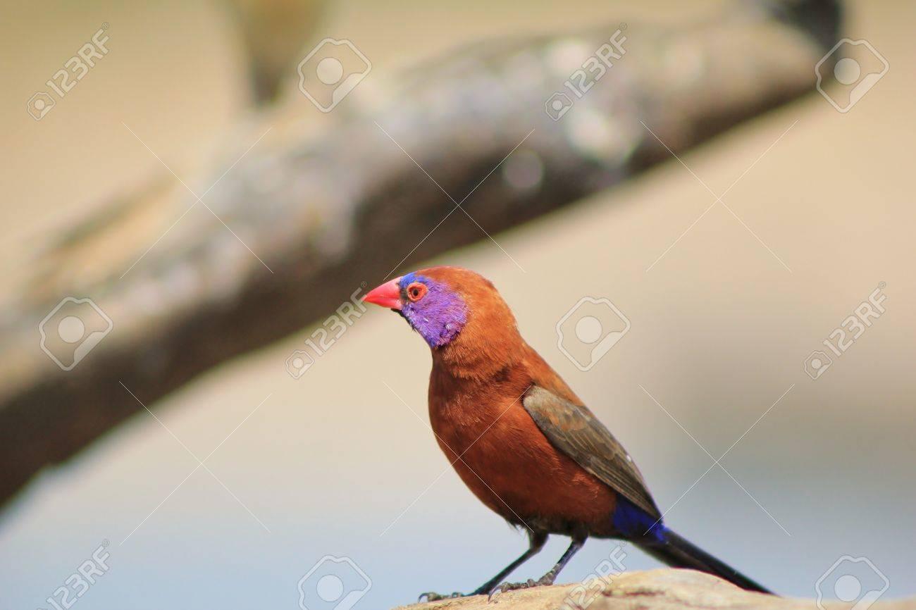 Wild Birds In Africa Wild Birds from Africa